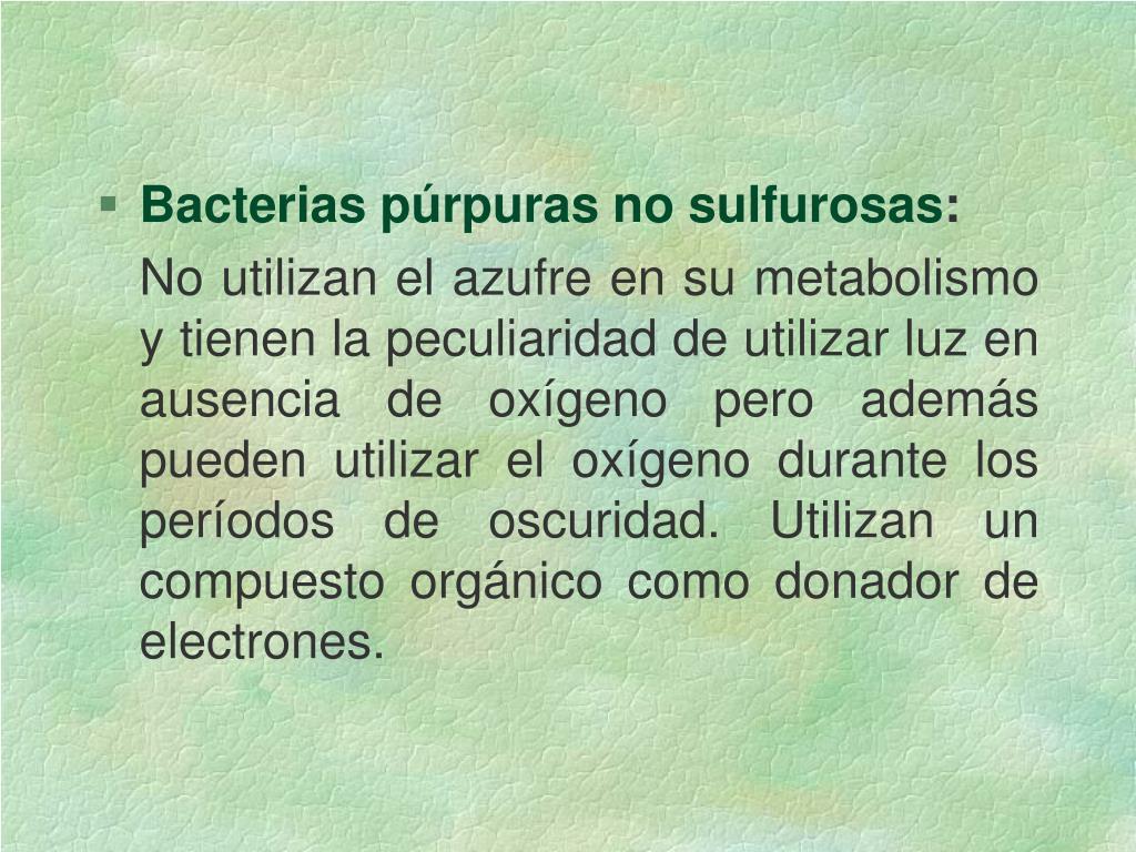 Bacterias púrpuras no sulfurosas