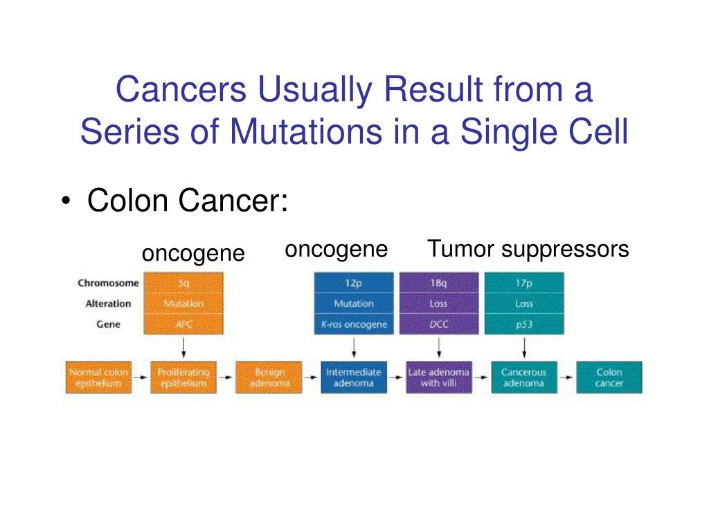 Cancers Usually Result from a Series of Mutations in a Single Cell