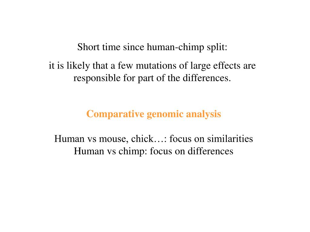 Short time since human-chimp split: