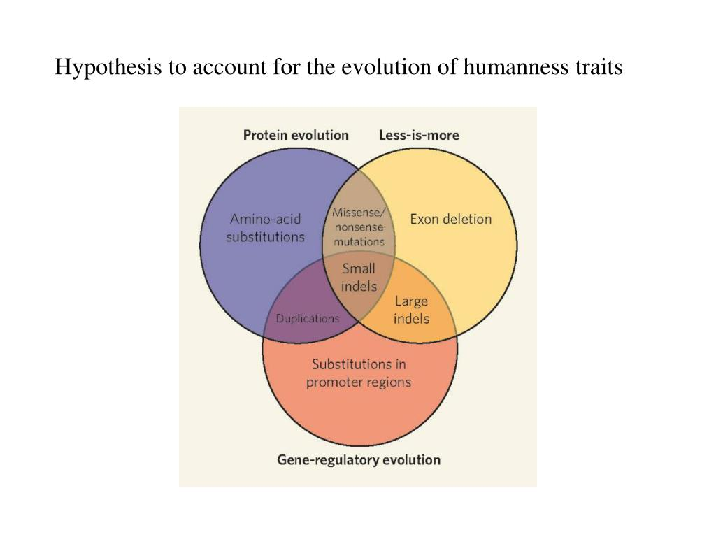 Hypothesis to account for the evolution of humanness traits