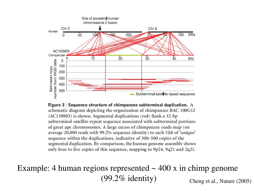 Example: 4 human regions represented ~ 400 x in chimp genome