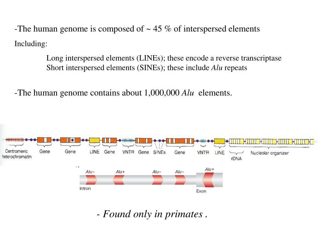 The human genome is composed of ~ 45 % of interspersed elements