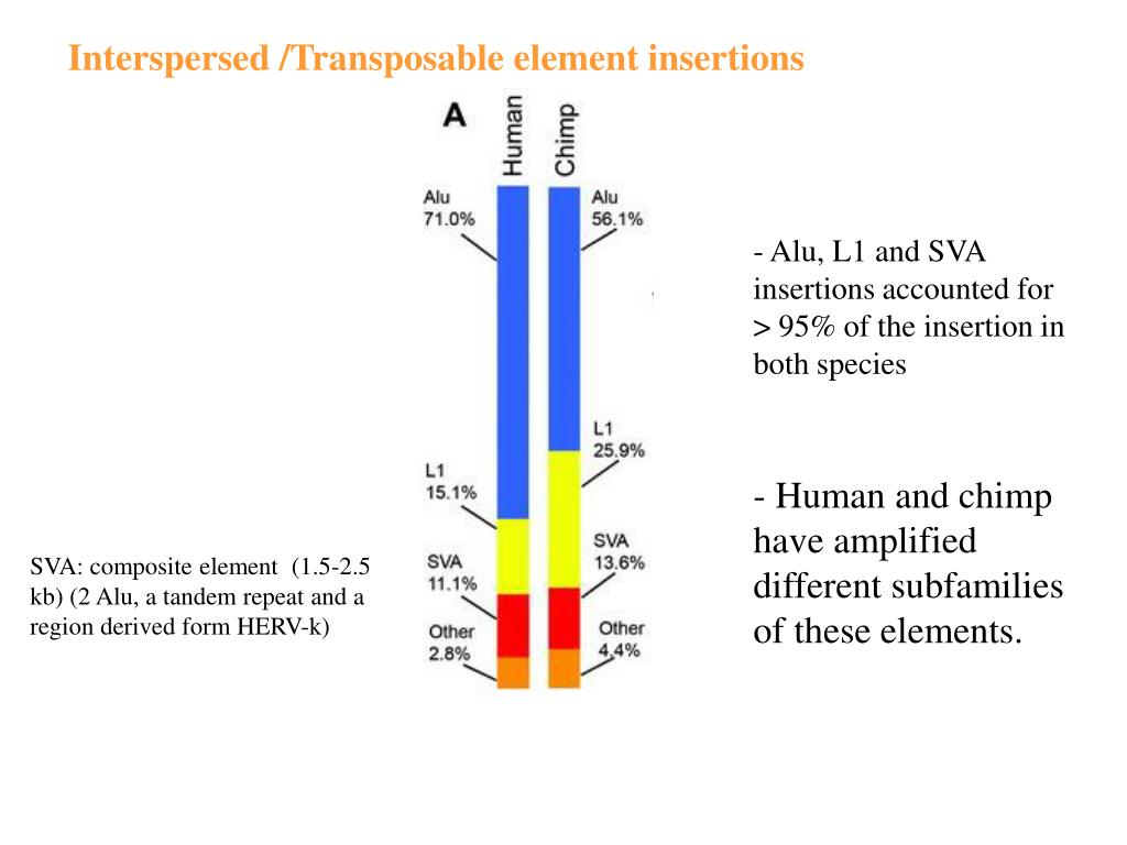 Interspersed /Transposable element insertions