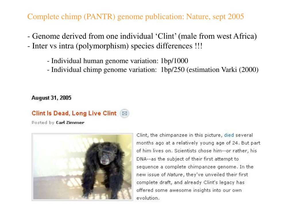 Complete chimp (PANTR) genome publication: Nature, sept 2005