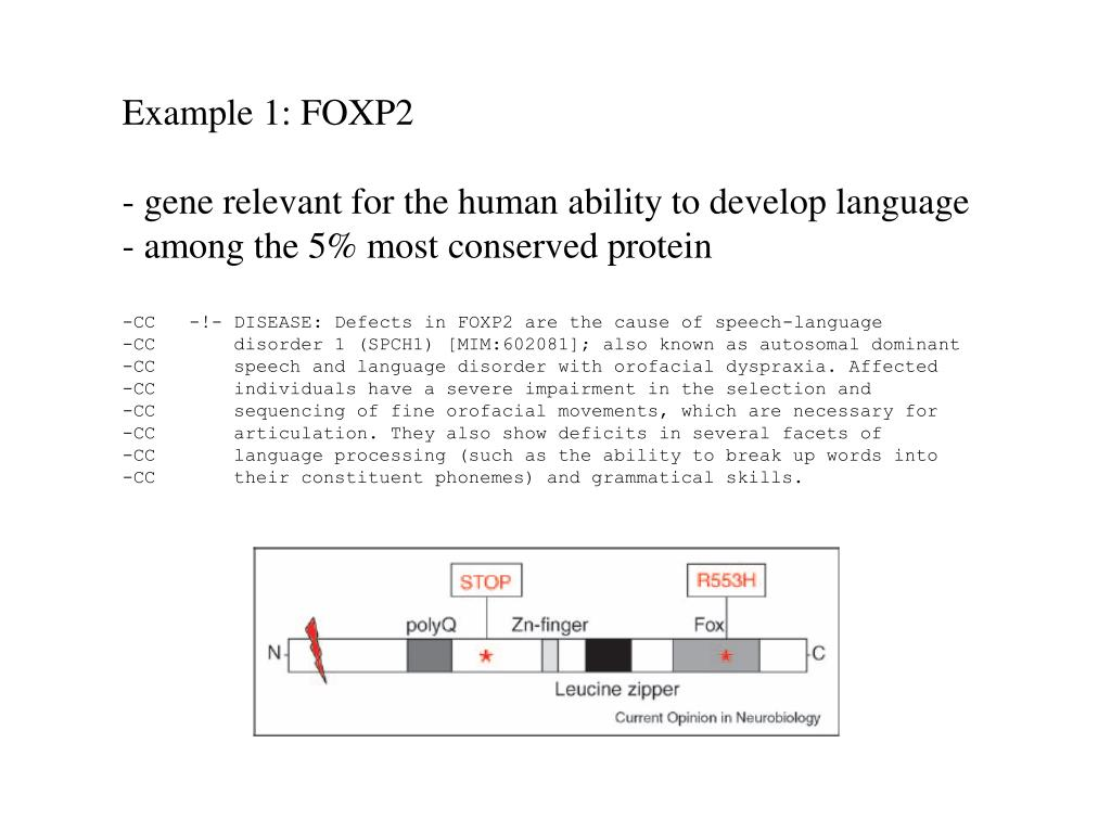 Example 1: FOXP2