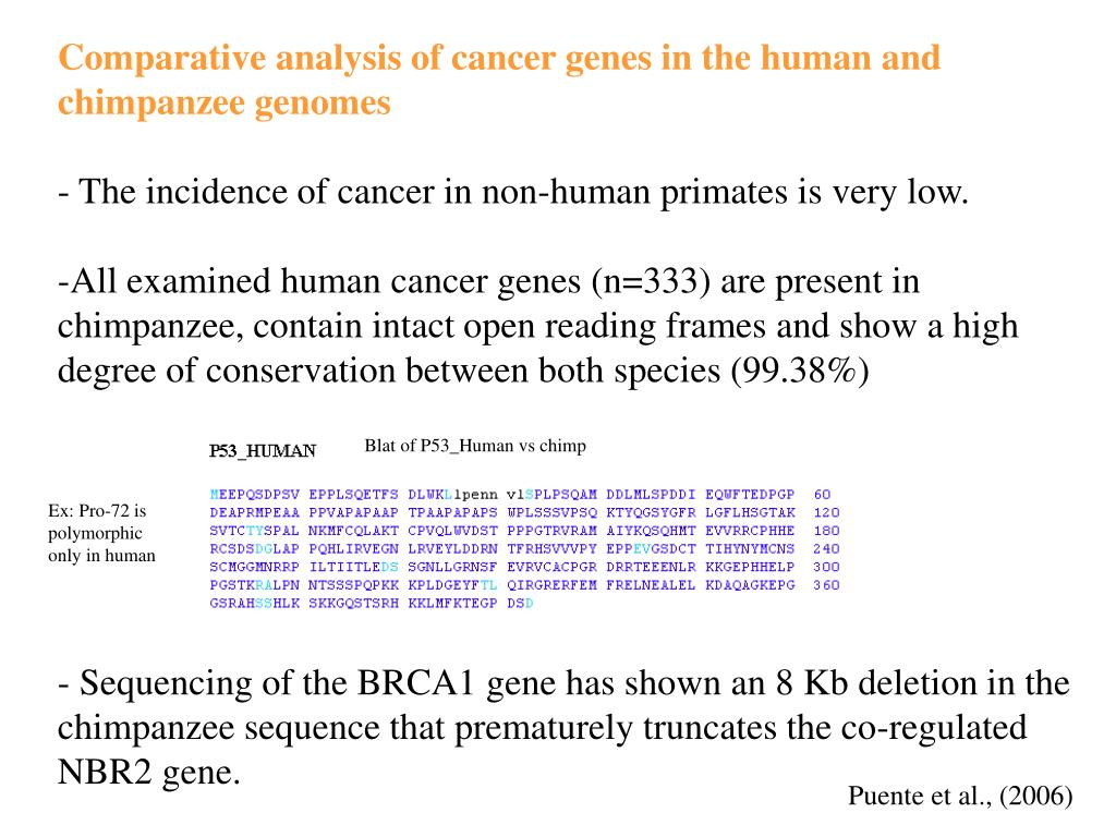 Comparative analysis of cancer genes in the human and chimpanzee genomes