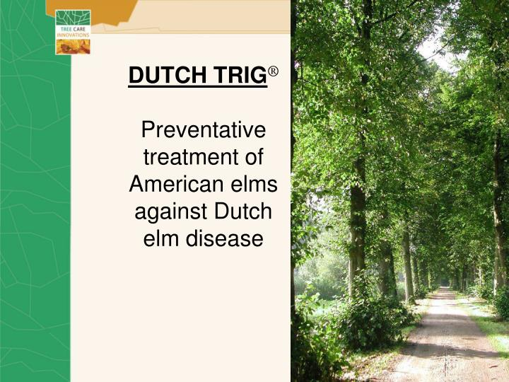 Dutch trig preventative treatment of american elms against dutch elm disease l.jpg