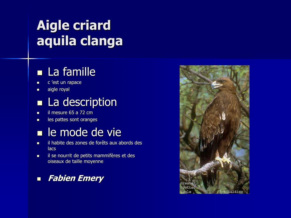 Aigle criard