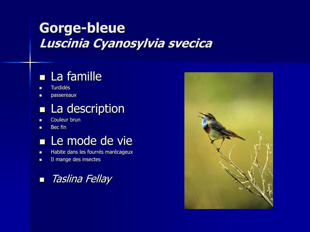 Gorge-bleue