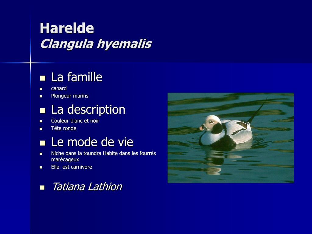 Harelde