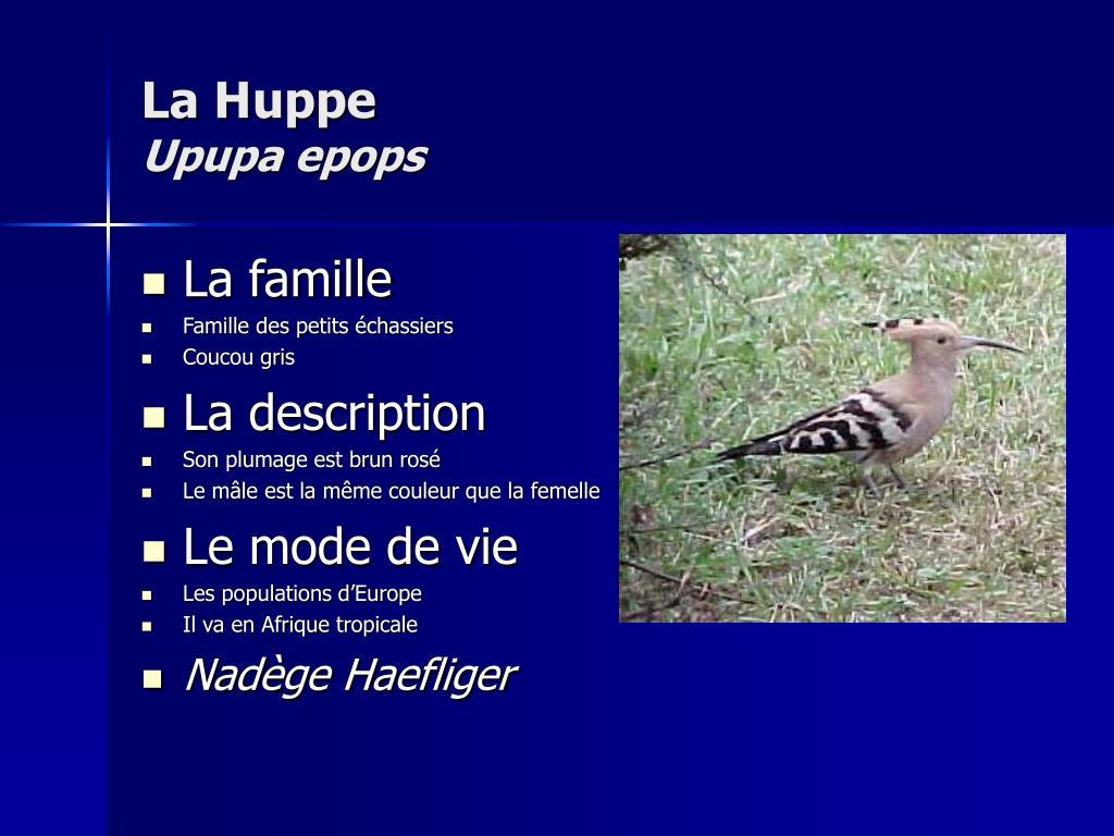 La Huppe