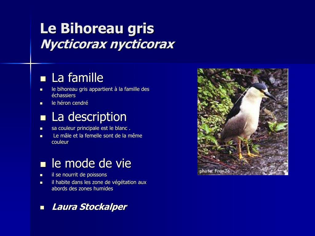 Le Bihoreau gris