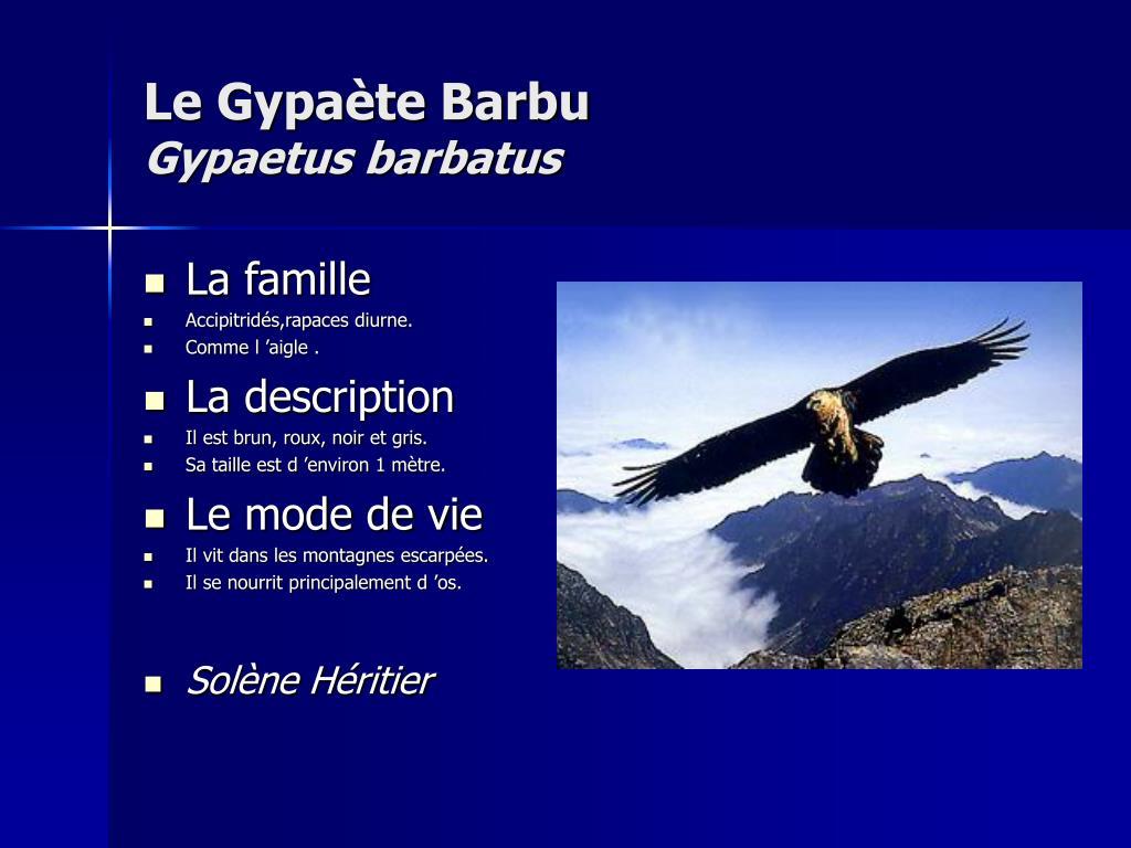 Le Gypaète Barbu
