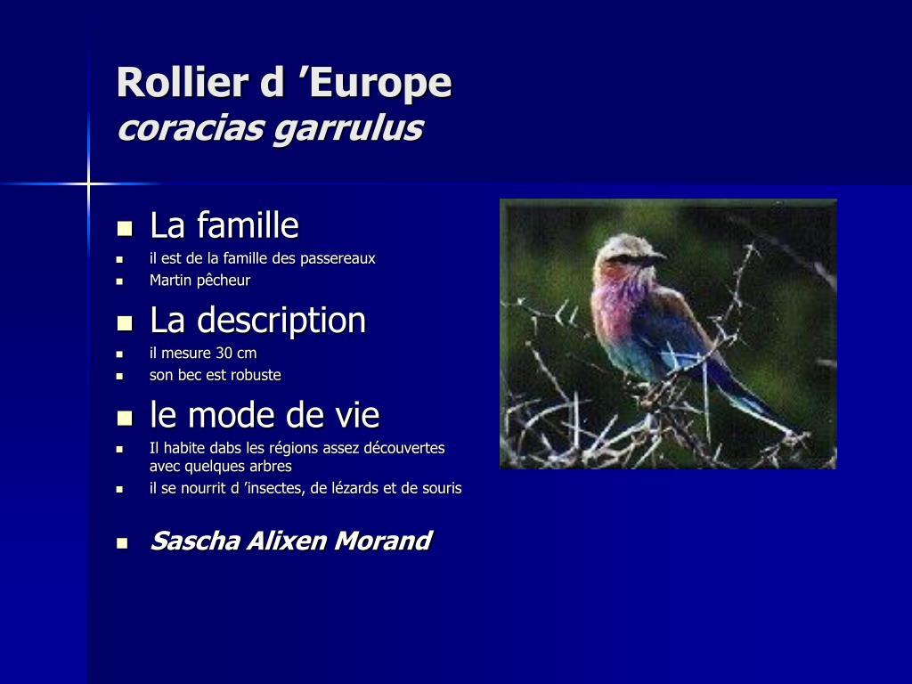 Rollier d'Europe