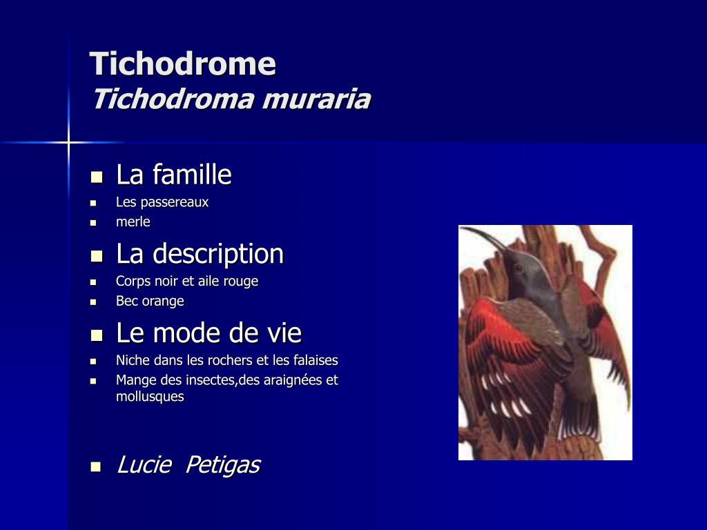 Tichodrome