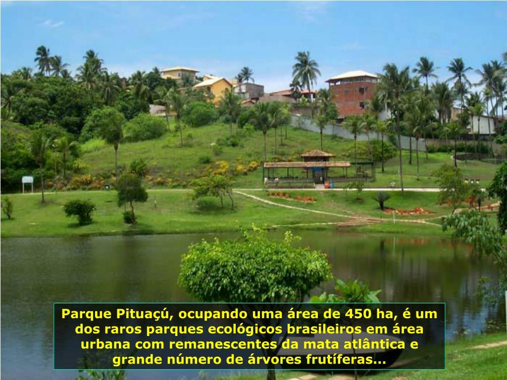 Parque Pituaçú, ocupando uma área de 450 ha, é um dos raros parques ecológicos brasileiros em área urbana com remanescentes da mata atlântica e grande número de árvores frutíferas...