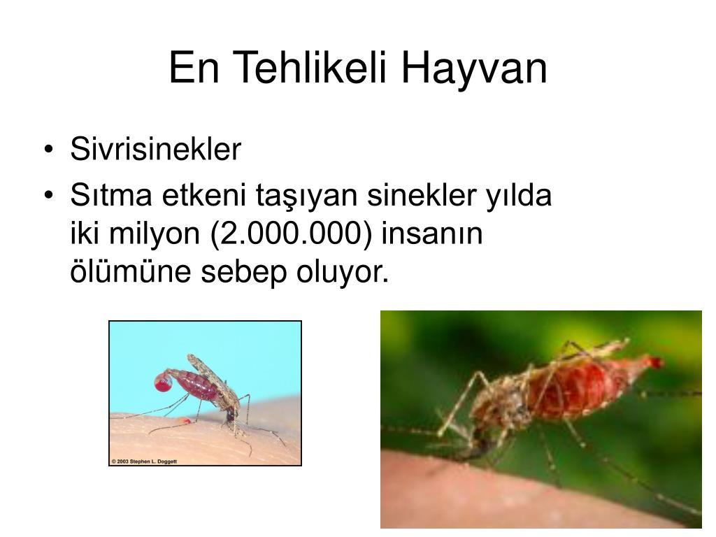 En Tehlikeli Hayvan