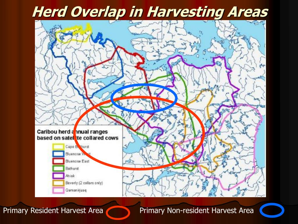 Herd Overlap in Harvesting Areas
