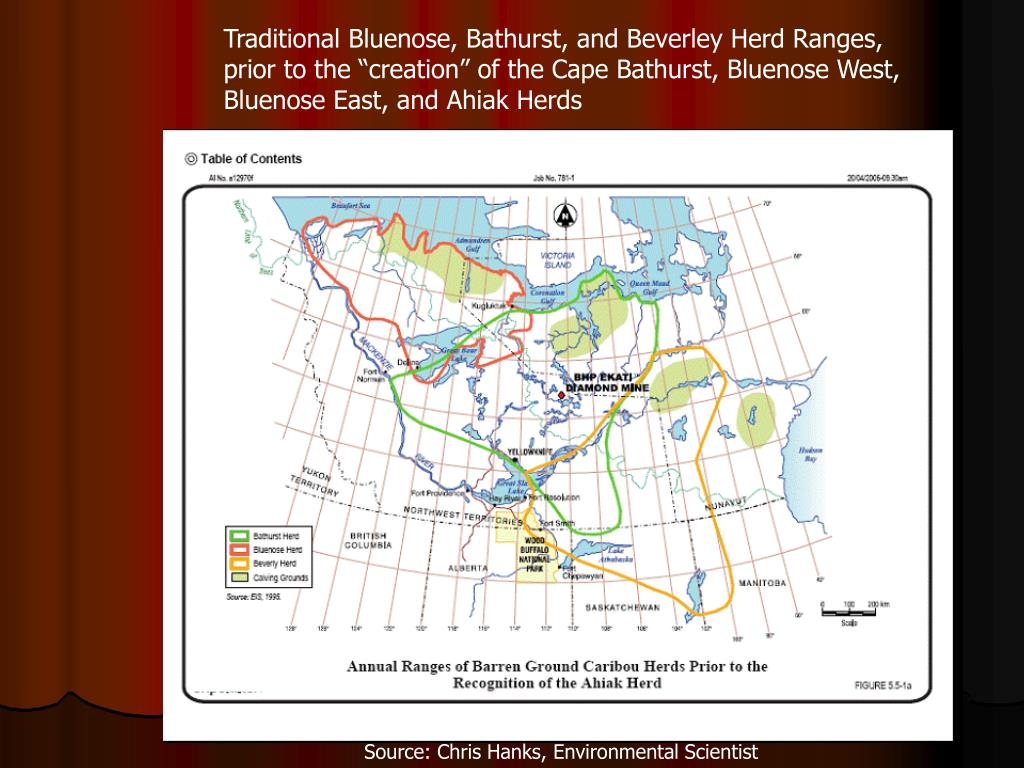 Traditional Bluenose, Bathurst, and Beverley Herd Ranges,