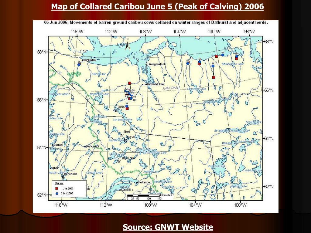 Map of Collared Caribou June 5 (Peak of Calving) 2006