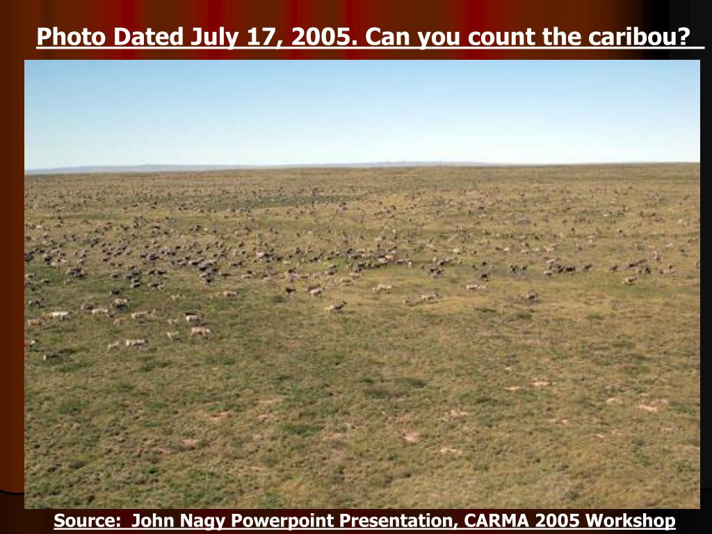 Photo Dated July 17, 2005. Can you count the caribou?