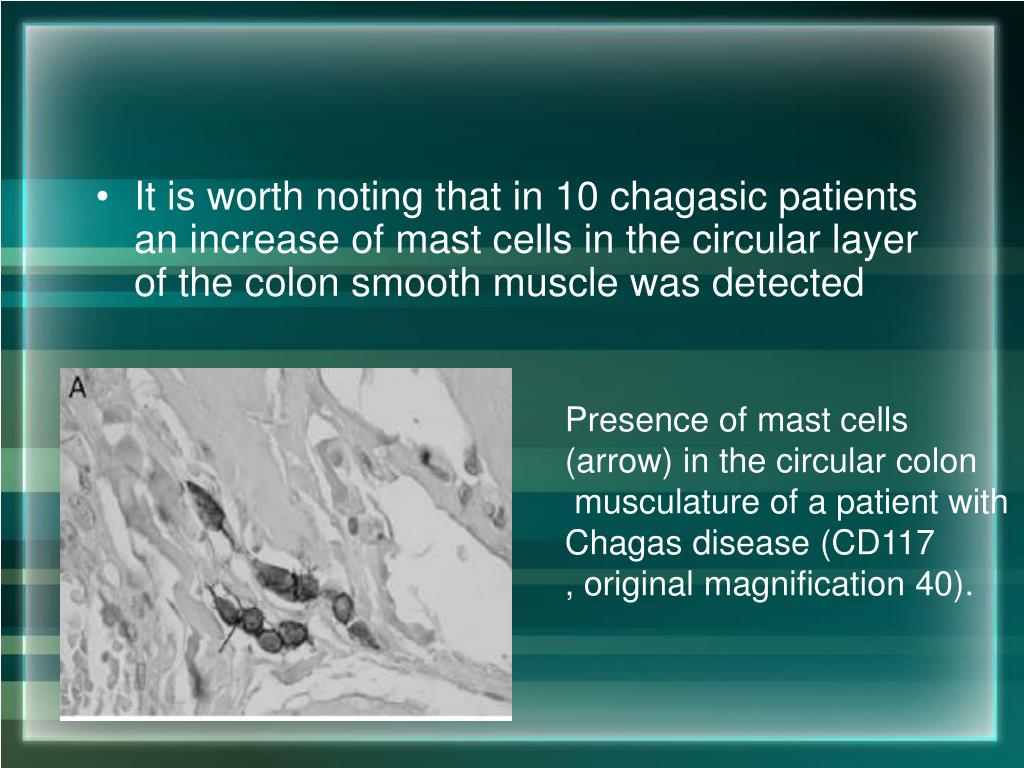 It is worth noting that in 10 chagasic patients an increase of mast cells in the circular layer of the colon smooth muscle was detected