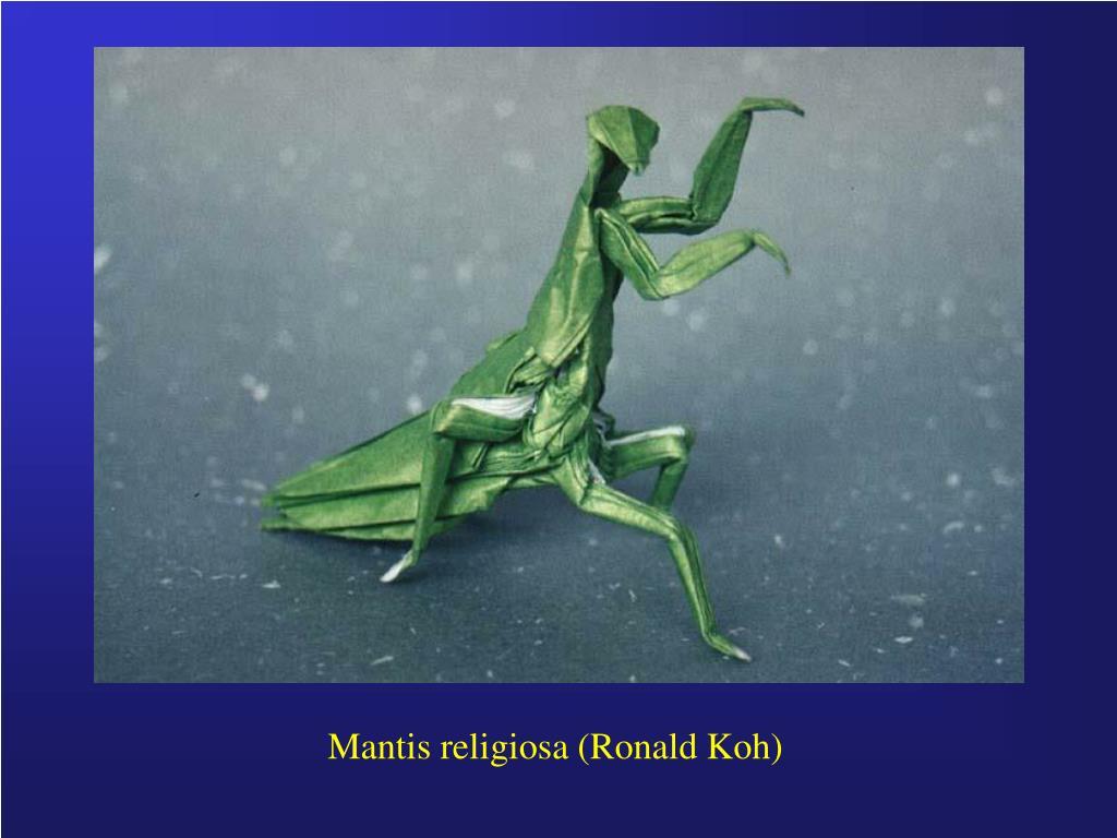 Mantis religiosa (Ronald Koh)