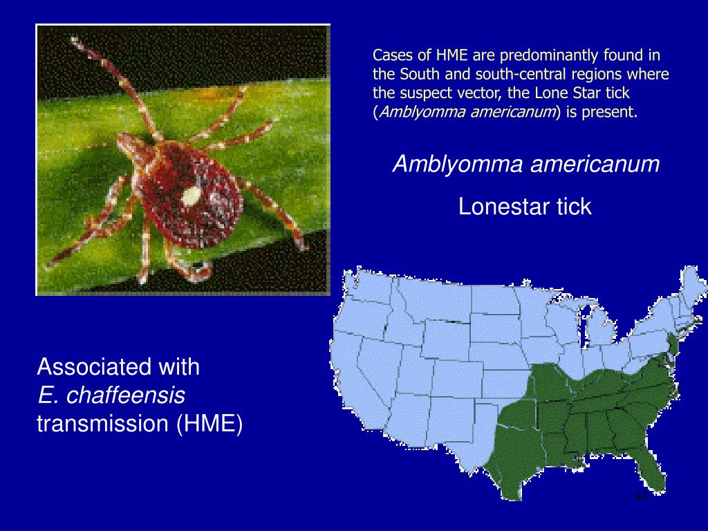Cases of HME are predominantly found in the South and south-central regions where the suspect vector, the Lone Star tick (