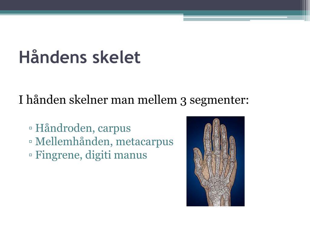 Håndens skelet
