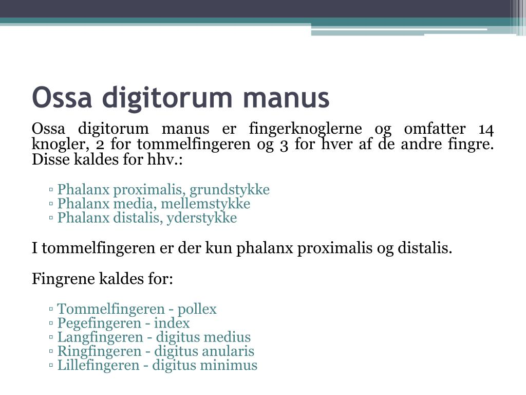 Ossa digitorum manus