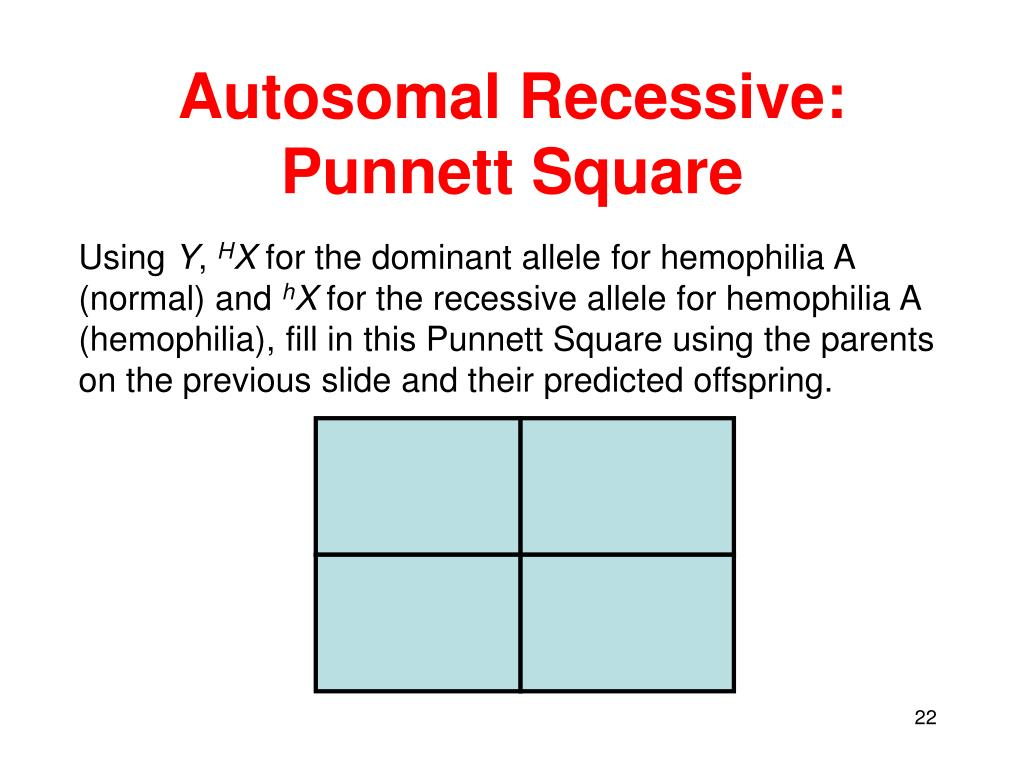 the gallery for gt x linked punnett square