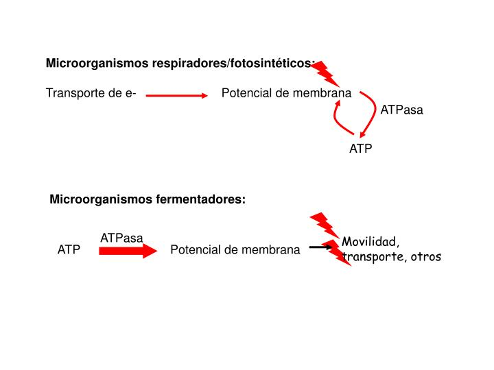 Microorganismos respiradores/fotosintéticos: