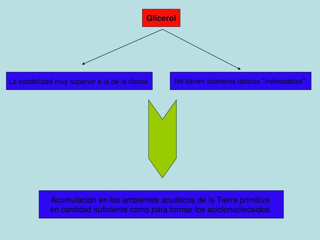 La estabilidad muy superior a la de la ribosa