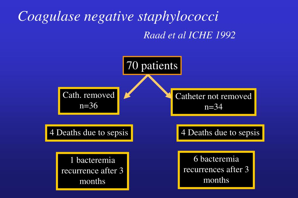 Coagulase negative staphylococci