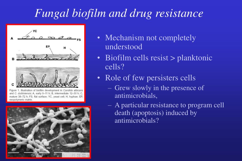 Fungal biofilm and drug resistance