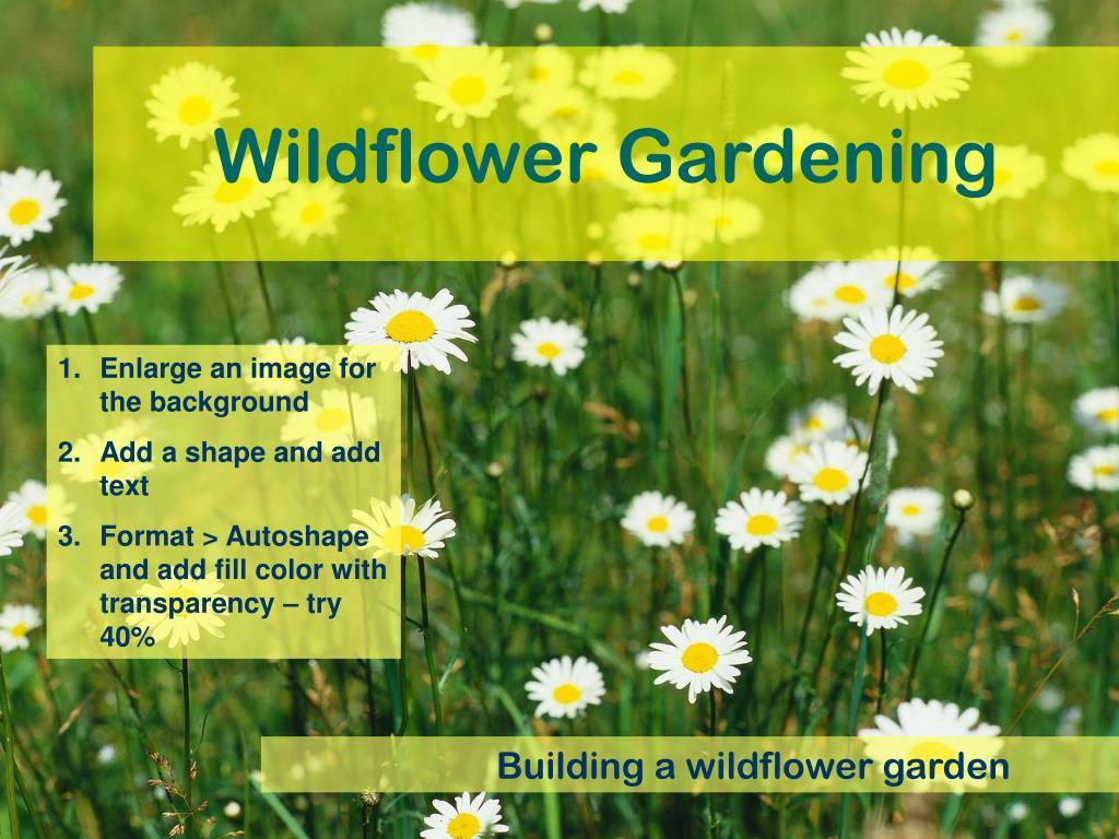 Wildflower Gardening