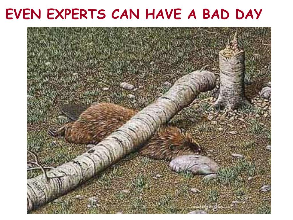 EVEN EXPERTS CAN HAVE A BAD DAY