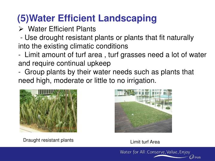 (5)Water Efficient Landscaping
