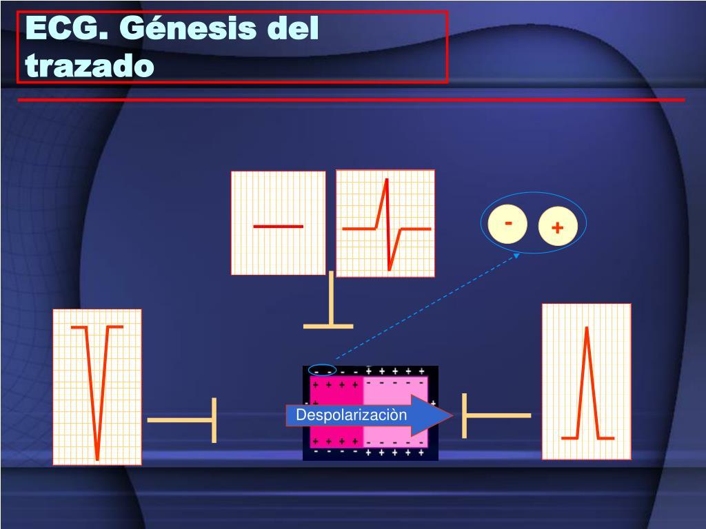 ECG. Génesis del trazado
