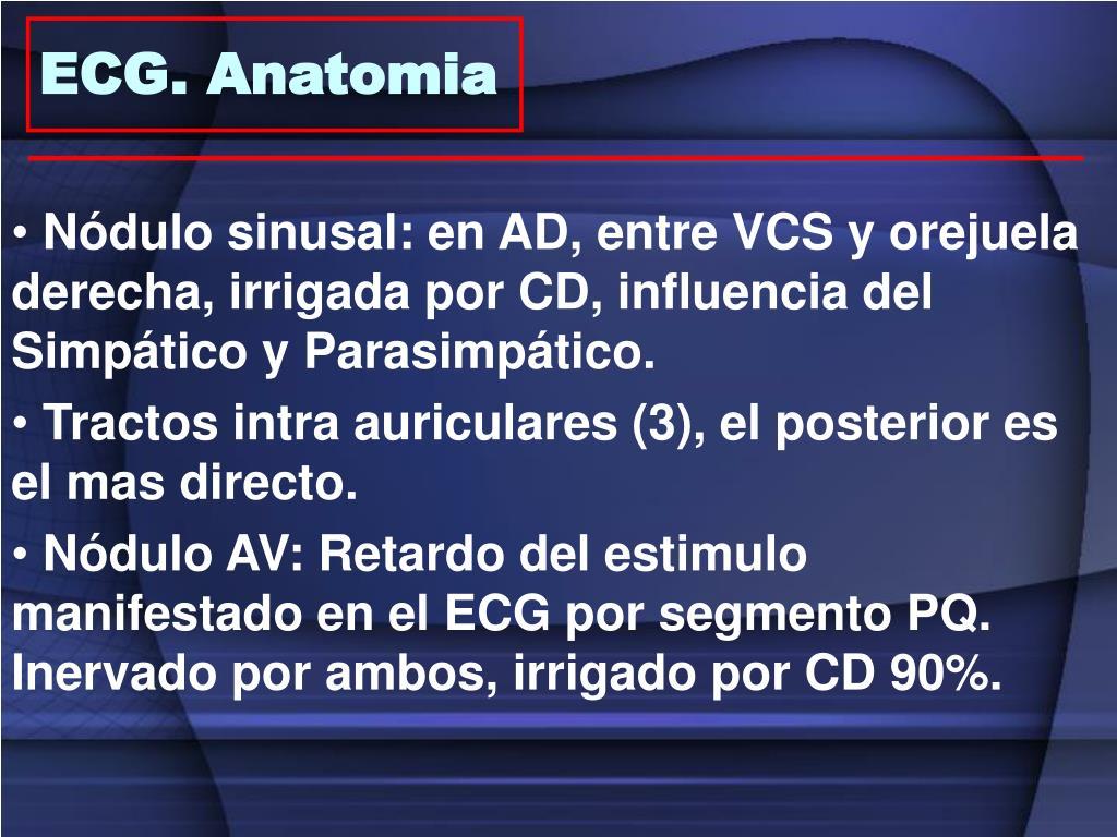 ECG. Anatomia