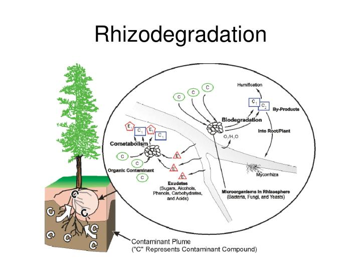 an introduction to phytoremediation