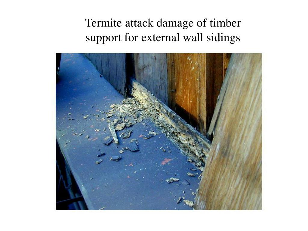 Termite attack damage of timber support for external wall sidings