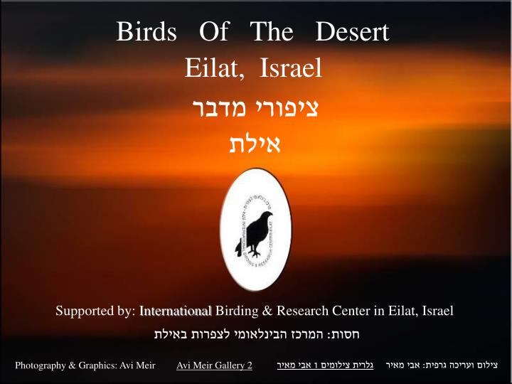 Birds   Of   The   Desert