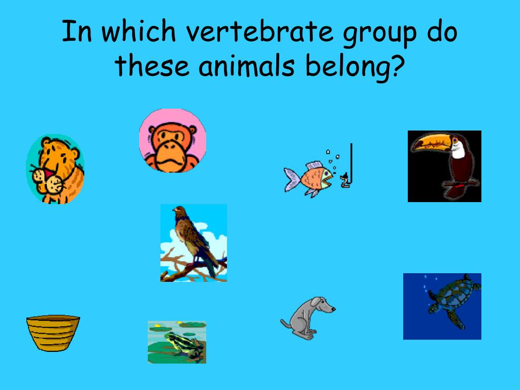 In which vertebrate group do these animals belong?