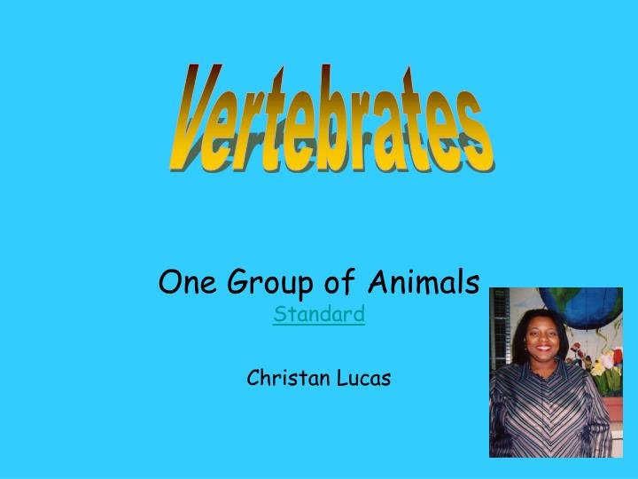 One group of animals standard christan lucas