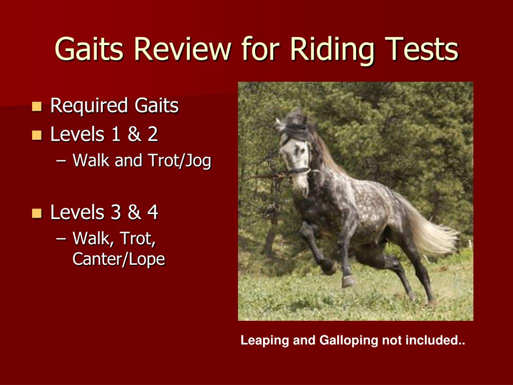 Gaits Review for Riding Tests