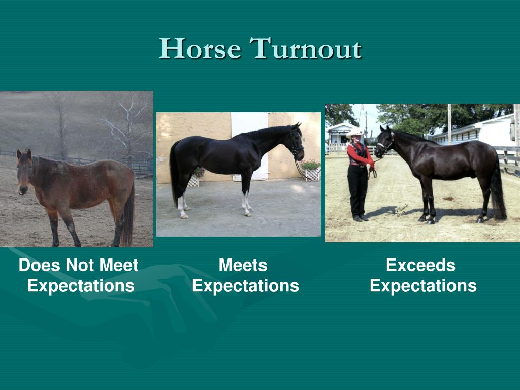 Horse Turnout