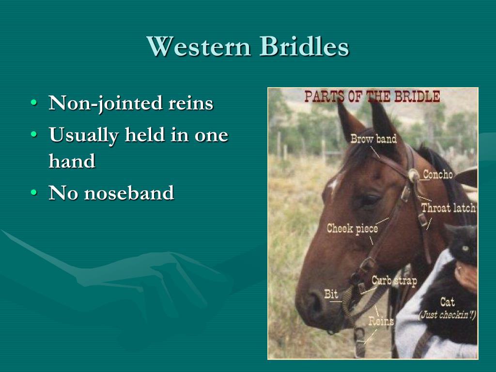 Western Bridles