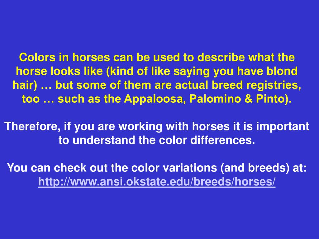Colors in horses can be used to describe what the horse looks like (kind of like saying you have blond hair) … but some of them are actual breed registries, too … such as the Appaloosa, Palomino & Pinto).