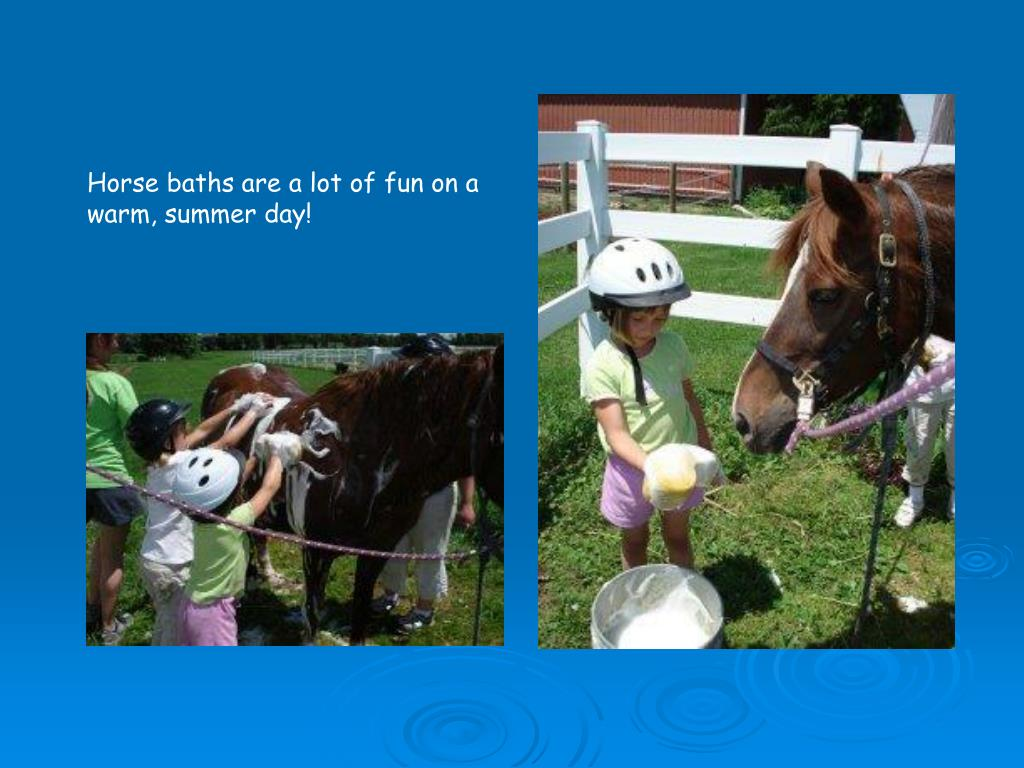 Horse baths are a lot of fun on a warm, summer day!